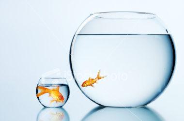 El pez rápido se come al pez lento.